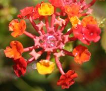 Le pouvoir des fleurs - Rouge comme une pivoine ...